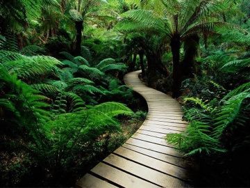 Path through forest ferns