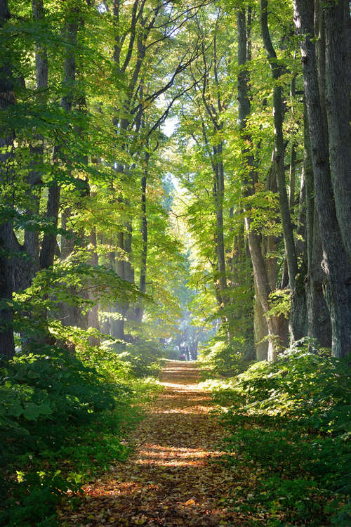 Photograph of forest path with sunlight through the trees